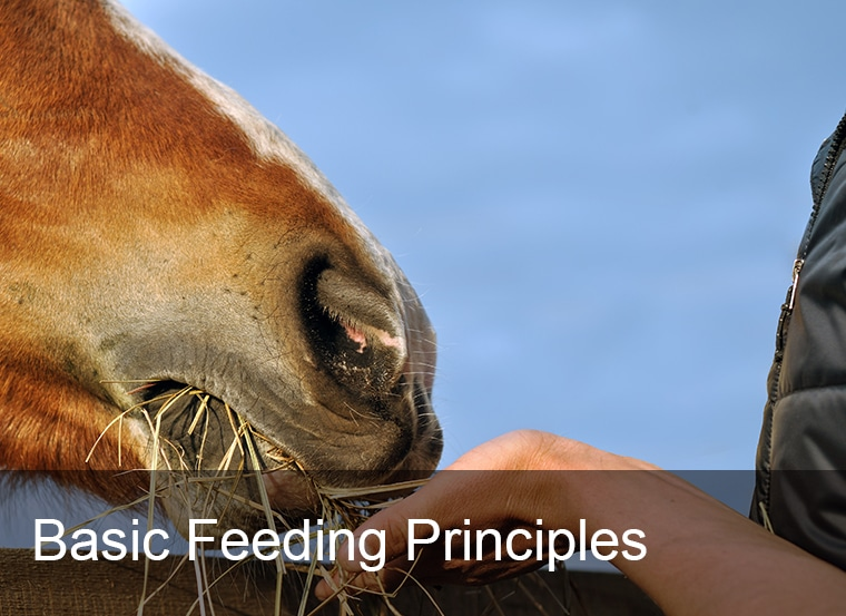 Basic Feeding Principles